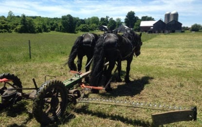 NOFA-NY's organic on-farm field days in Cazenovia
