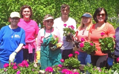Planters spruce up village of Manlius thanks to volunteers