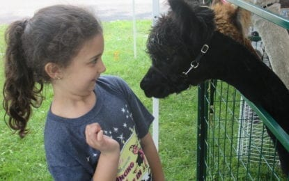 Alpaca 'Showtacular' takes place Oct. 20-22 at the Fairgrounds