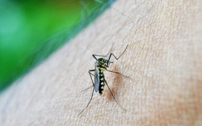 Additional findings of EEE in mosquito pools; spraying of Cicero Swamp planned