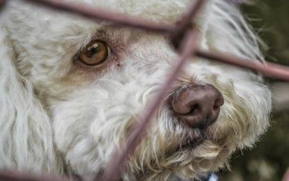 LETTER: New legislation would prevent pet leasing in New York