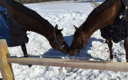 The Haven at Skanda kicks off Horses for the Holidays donation program
