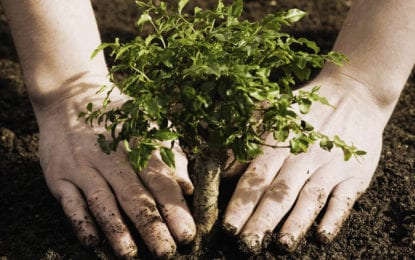Tree planting ceremony planned by Village Tree Commission