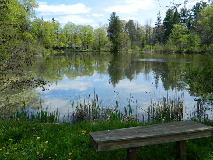 One year later – goldfish still in Carpenter's Pond