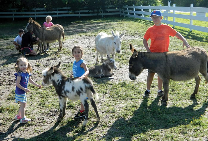 how to start an animal therapy farm