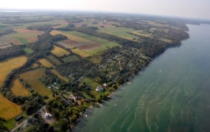 The latest information on algae blooms