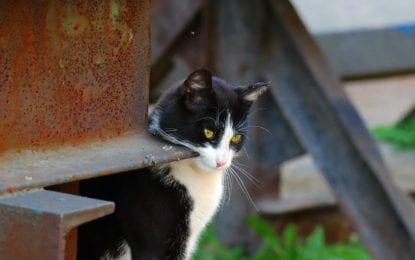 CNY Cat Coalition to help village handle stray cats