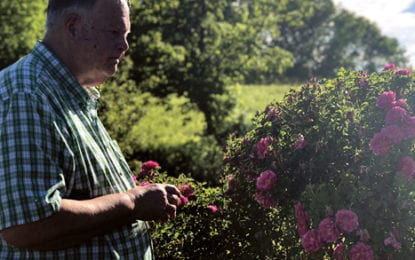'We thought we couldn't grow them out here': Cazenovia property blooms with owner's rose garden