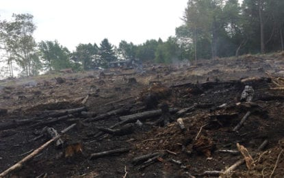 10-acre wildfire destroys homeowner's land in Hamilton