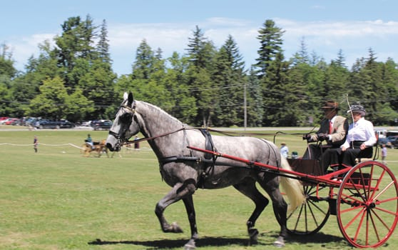 OFF TO THE RACES:  41st annual Lorenzo Driving Competition returns