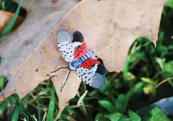 COLUMN: Have you spotted the spotted lanternfly?